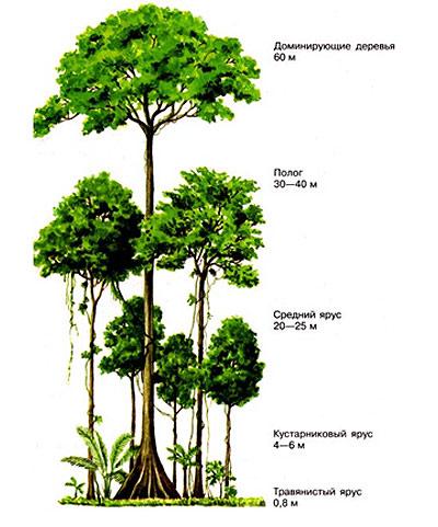 Признаки растений 1 яруса