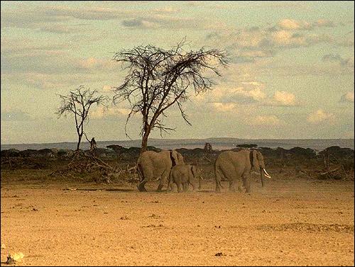 savanna research paper