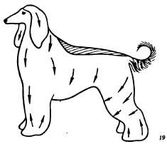 Уход за породами собак с длинной мягкой ниспадающей шерстью (афганская борзая, ши-тцу, лхасский апсо, мальтийская болонка, скай-терьер, йоркширский терьер)