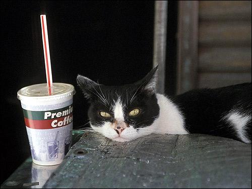 Черно-белая кошка, лежащая на столе. Фото, фотография картинка животные