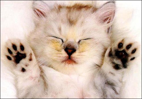 Спящий на спине котенок. Фото, фотография картинка кошки
