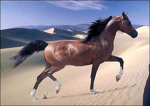 Лошадь, идущая по пескам пустыни. Фото, фотография картинка